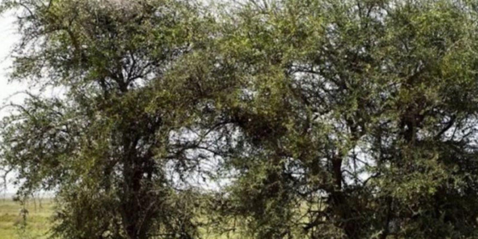 ¿En dónde está el leopardo? Foto:Vía Twitter.com