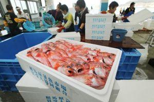 Personas comercian pescado en una zona de Japón. Foto:AFP