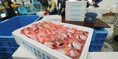 """¿A qué saben los pescados """"radiactivos"""" de Fukushima?"""