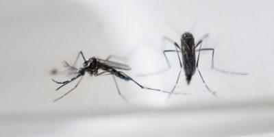 Últimas noticias virus Zika, hoy 25 de febrero de 2016