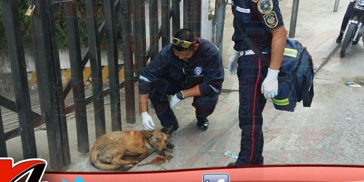 Bomberos realizan rescate de un perrito atropellado