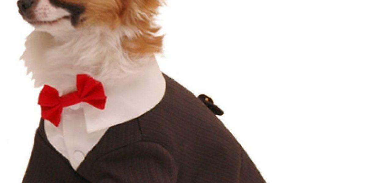 Falta poco para los Oscar 2016 y tu perro lo sabe