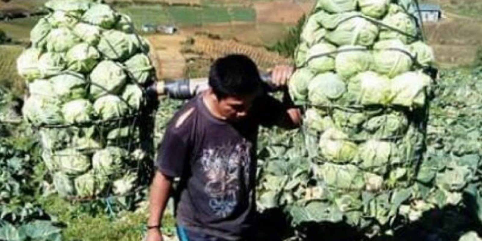"""Cabbage Man"". Foto: vía Facebook"