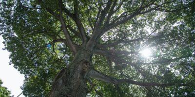 """VIDEO. Un jardín botánico que ya no """"crece"""