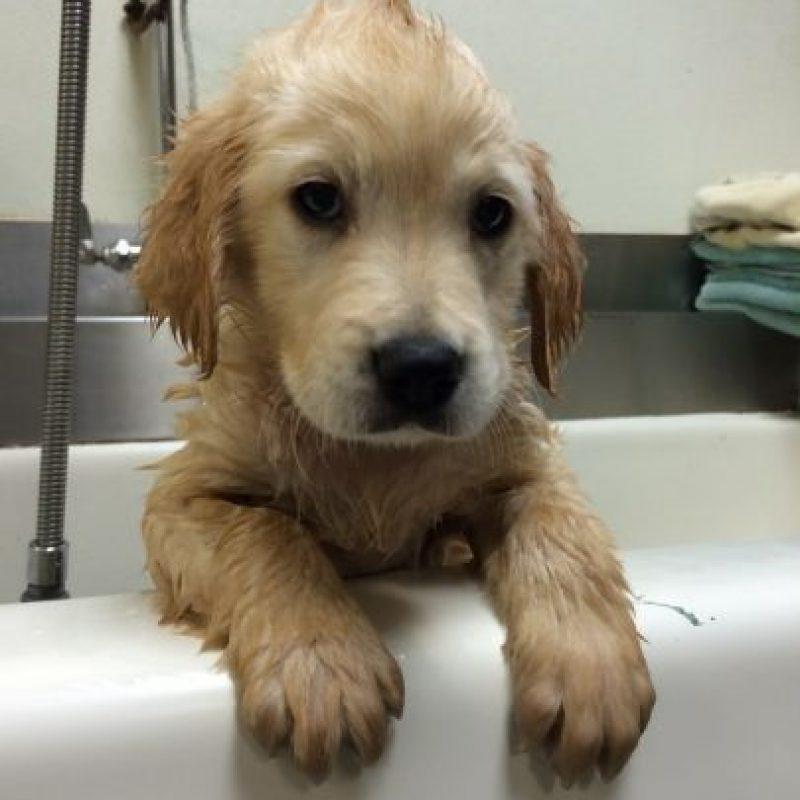 Wesley es un simpático perro al que tuvieron que ponerle frenillos por un problema dental. Foto:Molly Moore