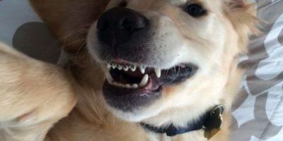 Conoce a Wesley, el perro con frenillos que está rompiendo corazones en Internet