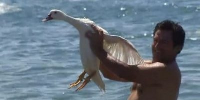 Prohíben perseguir patos (Empaitada d