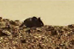 Y este es el supuesto ratón gigante marciano Foto:NASA
