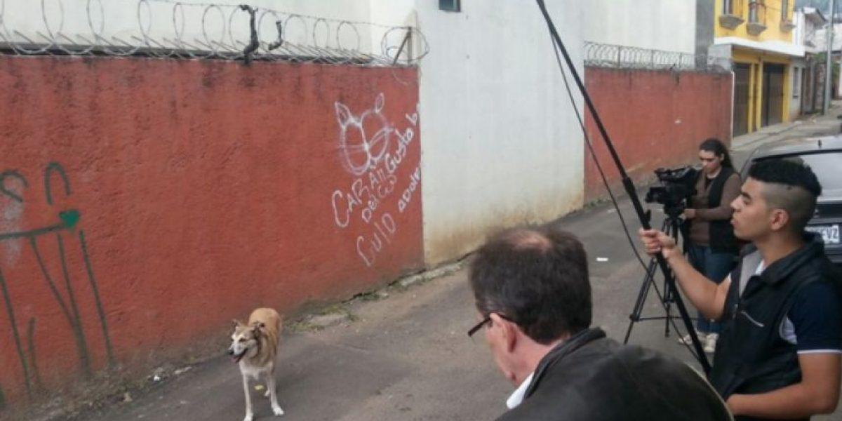 """Fichulais: Un callejero con suerte"", la primera película canina guatemalteca"