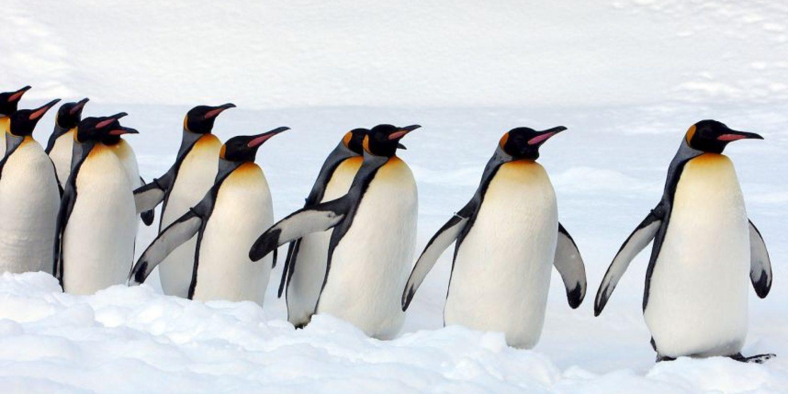 Viven en colonias de cientos o hasta miles de individuos Foto:Getty Images