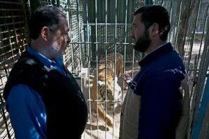 Mohamed Awaida asegura que ya no tiene dinero para alimentarlos. Foto:AFP