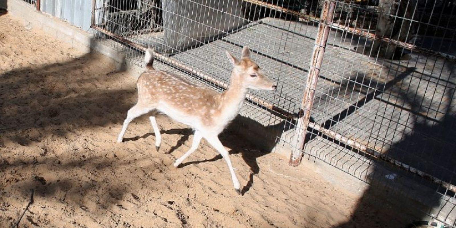 Uno de los zoológicos más tristes del mundo Foto:AFP
