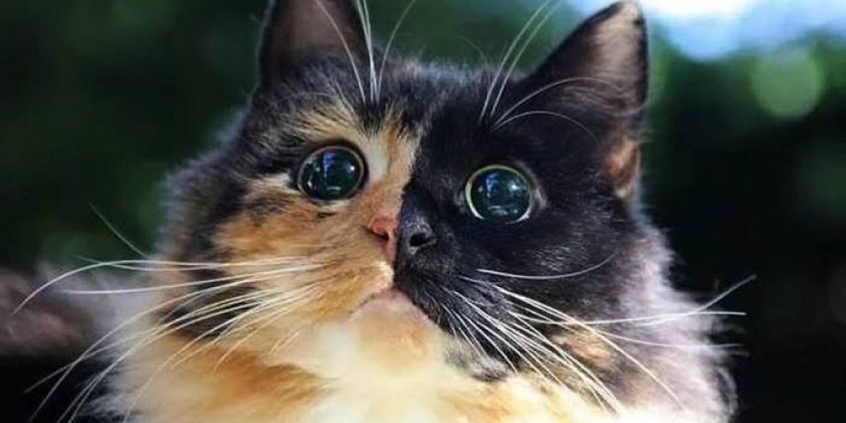 Gato inspira a muchos al mostrar su belleza a pesar de una gran limitación