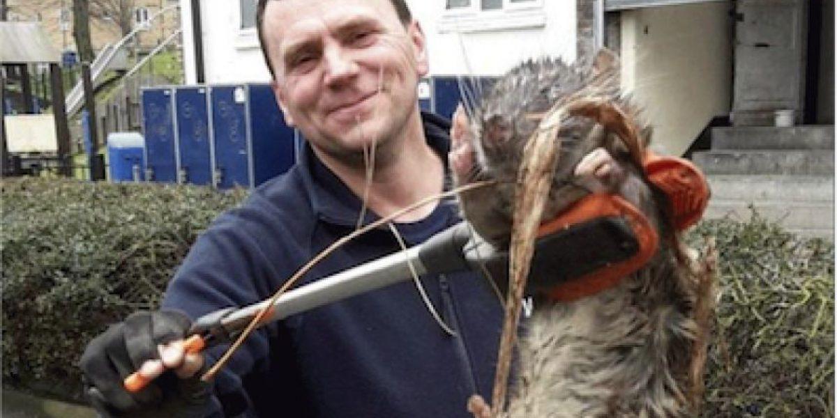 La verdad detrás de la rata gigante de Londres