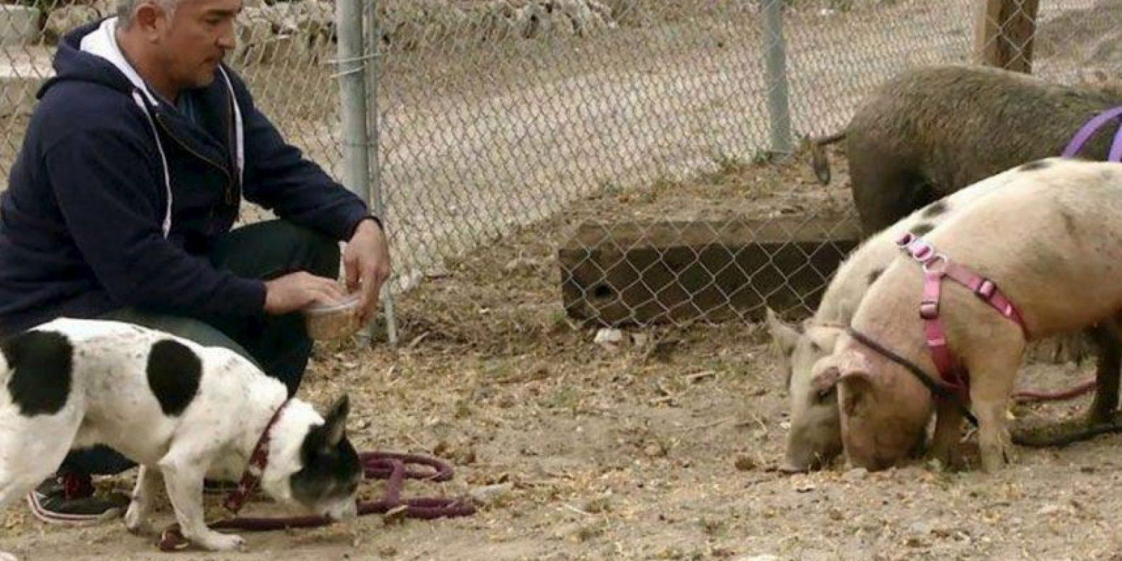 """El llamado """"Encantador de perros"""" reaccionó a través de su redes sociales Foto:Vía facebook.com/cesar.millan"""