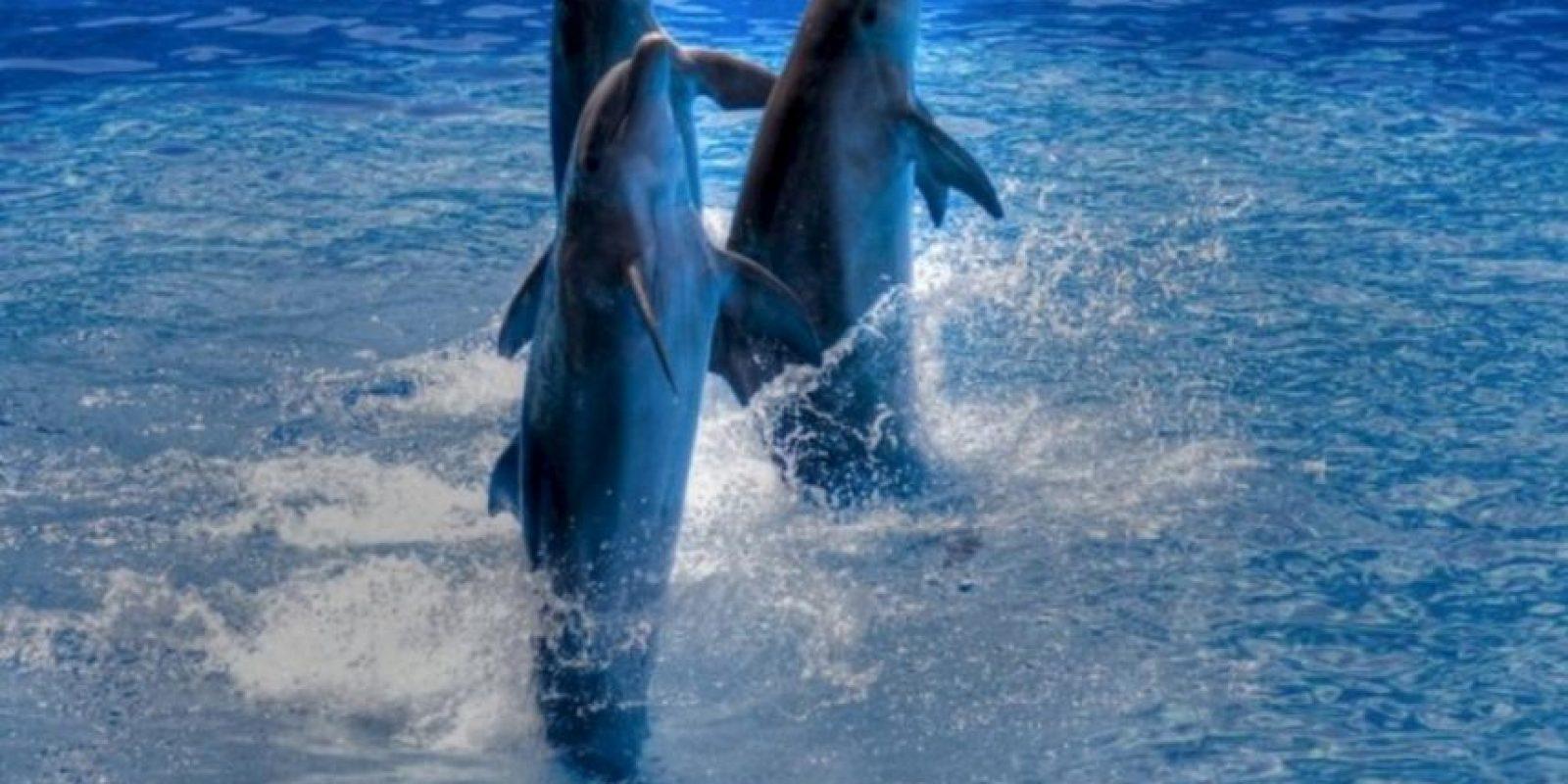 Delfines Foto:Wikimedia