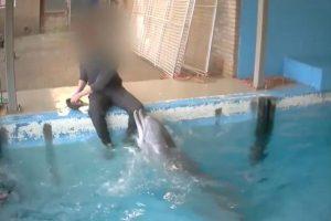 En el video publicado por la TV holandesa se ve al cuidador tocando al delfín en sus partes íntimas. Foto:Twitter.com
