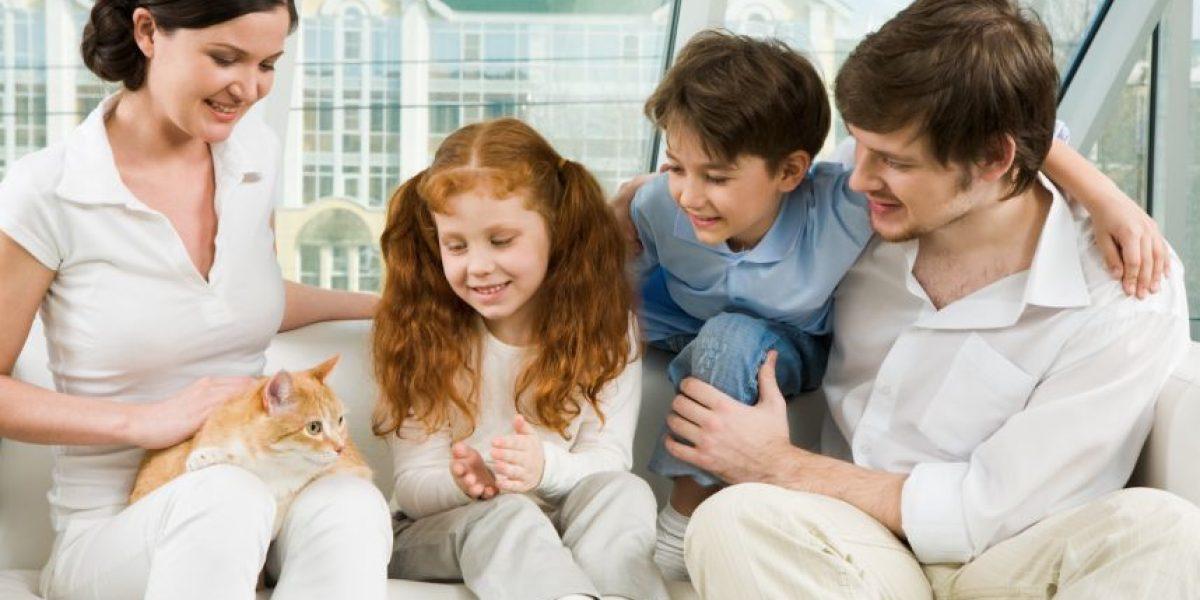 Consejos. Prepárate para recibir a un gato en la familia