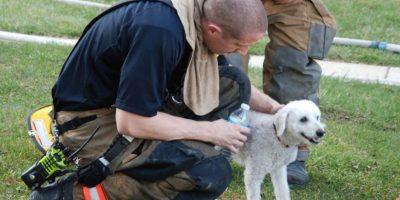 """Cachorro """"sonríe"""" mientras es rescatado en un incendio"""