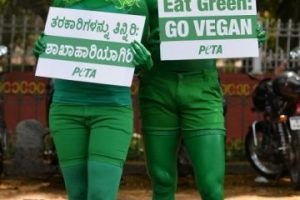 En India se aprovechó este día para hacer un llamado a favor del veganismo Foto:AFP