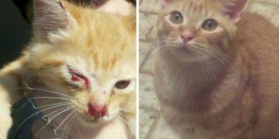 Animales antes y después de ser rescatados Foto:Reddit