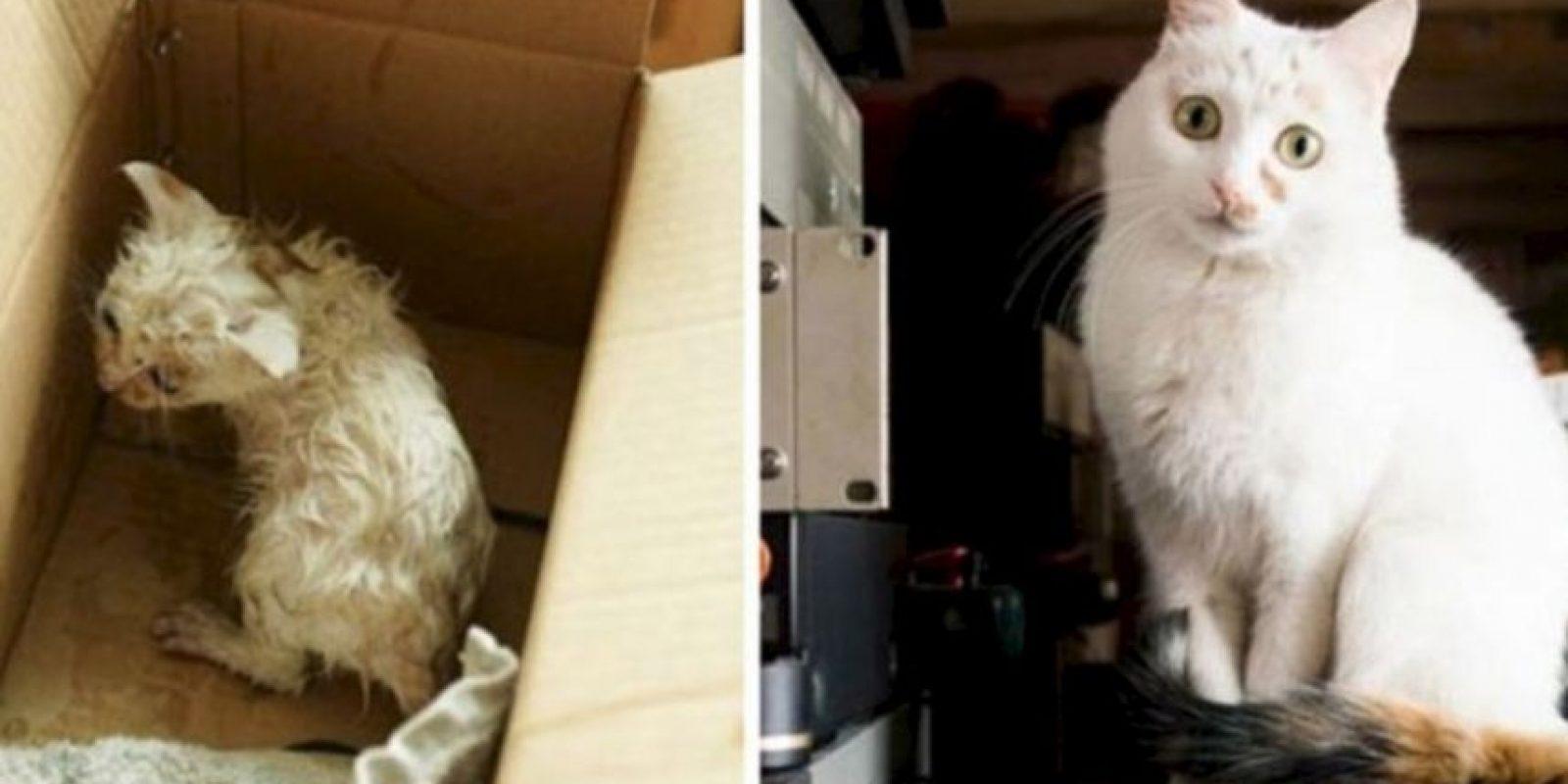 A continuación: Animales antes y después de ser rescatados Foto:Reddit