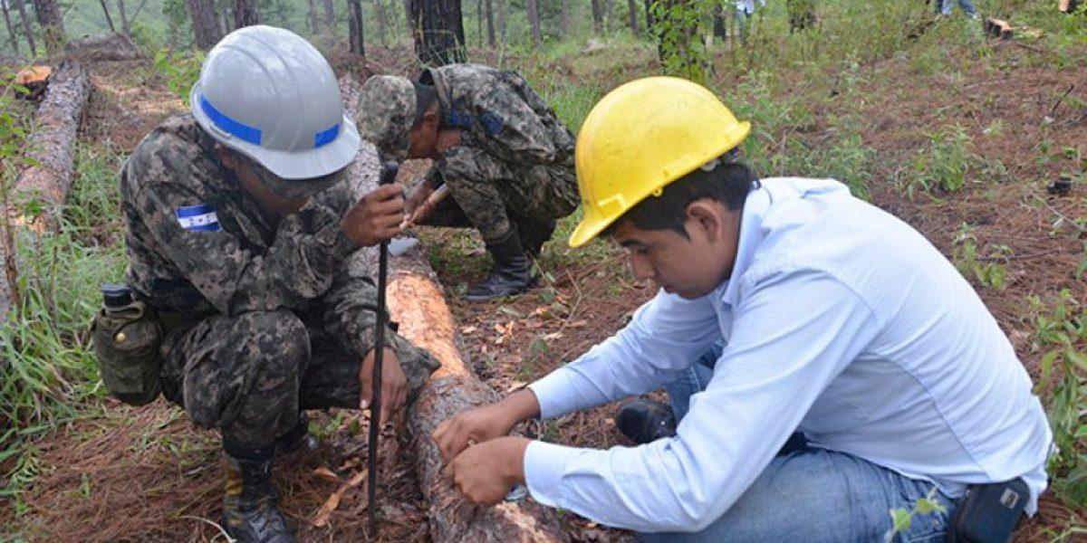 Prepararán plan para atacar incremento de plaga del gorgojo del pino