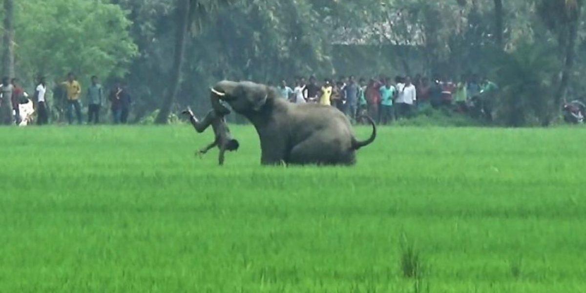Video: Estampida de elefantes en la India deja cinco muertos