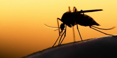 Cómo prevenir la malaria durante la Semana Santa