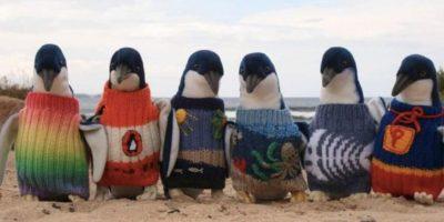 Son falsos. La isla australiana de Phillip pidió que se donaran suéters para protegerlos por un derrame de petróleo, pero de pronto tenían más suéteres que ayuda, informó la fundación oficial. Foto:vía Phillip Island Foundation