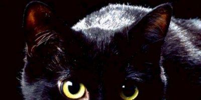 """9. Gatos negros: asociados al mal. Se dice que en los tiempos de la peste bubónica se """"vengaron"""" al dejar propagar las ratas que extendieron la enfermedad. Foto:vía Wikipedia"""