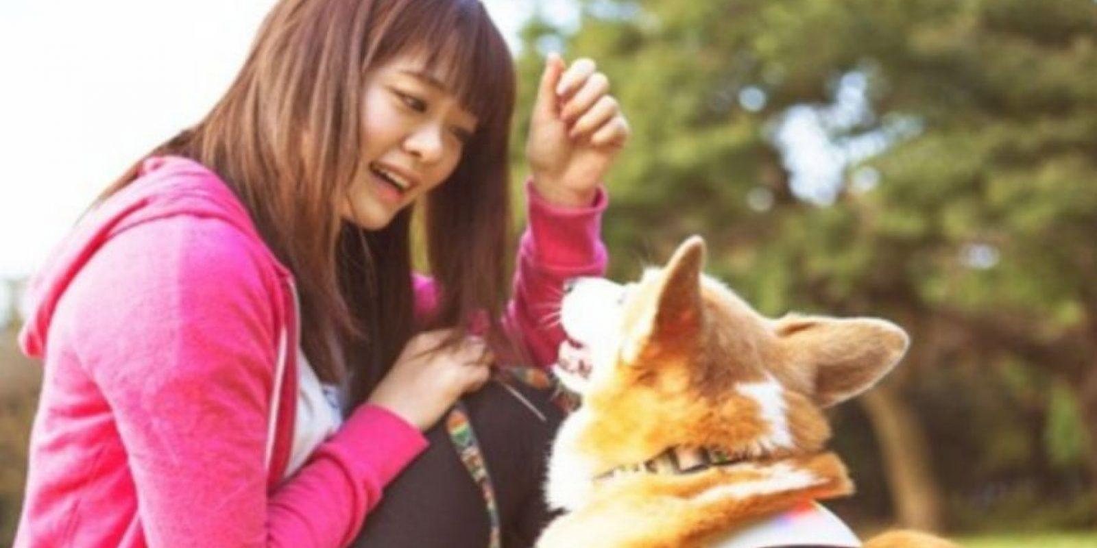 El Inupathy es para perros de 4 a 40 kilos. Foto:Inupathy
