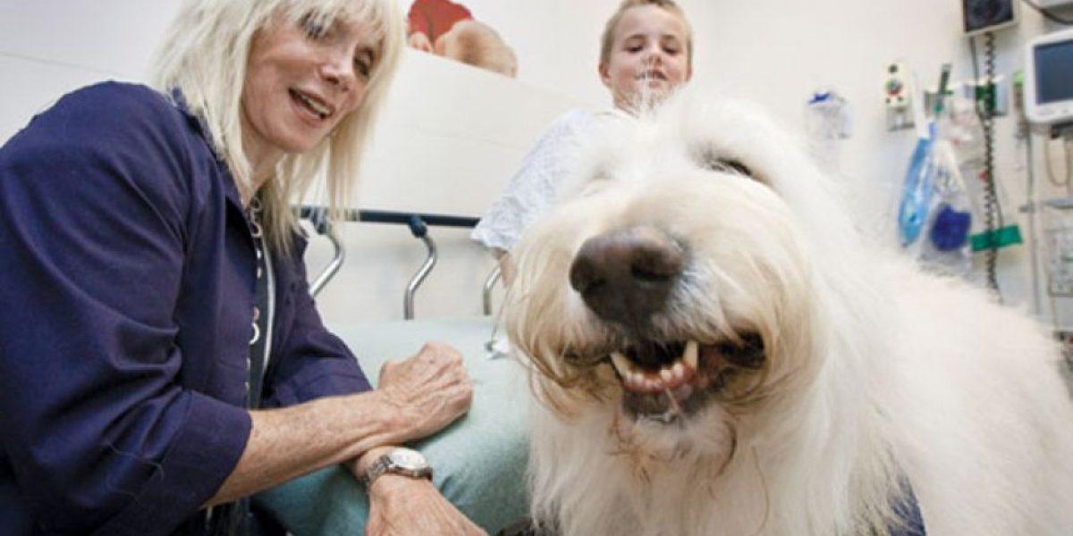 Este hospital permite que las mascotas visiten a sus dueños