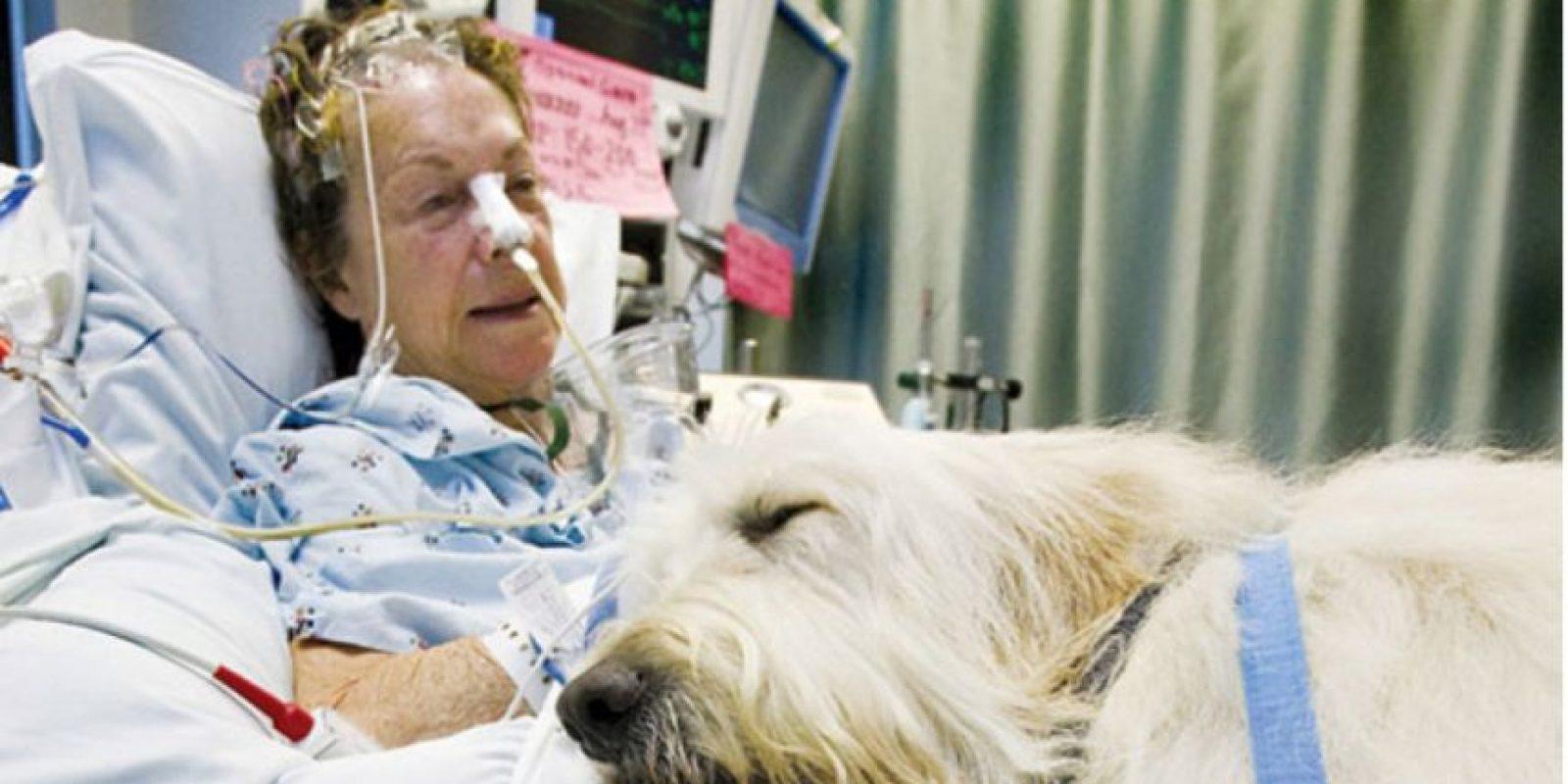 Estudios señalan que el contacto con los animales reduce el estrés de los pacientes. Foto:zacharyspawsforhealing.com/