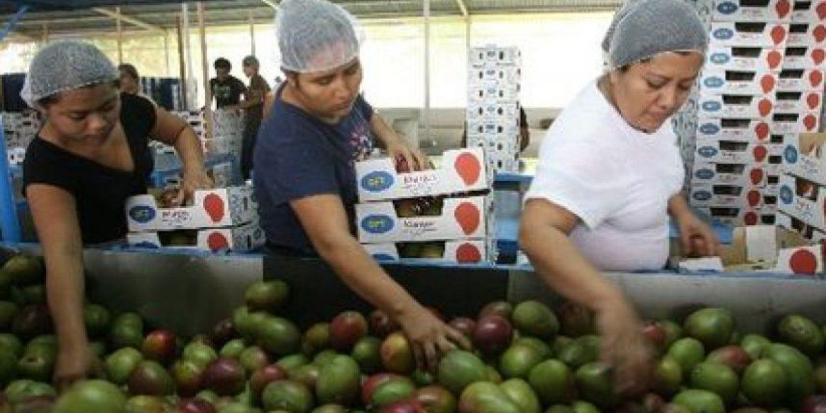 Productores de mango podrán exportar a Chile