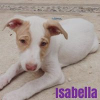"""Perritos rescatados por """"Help Tulum Dogs"""" Foto:Vía Facebook/helptulumdogs"""