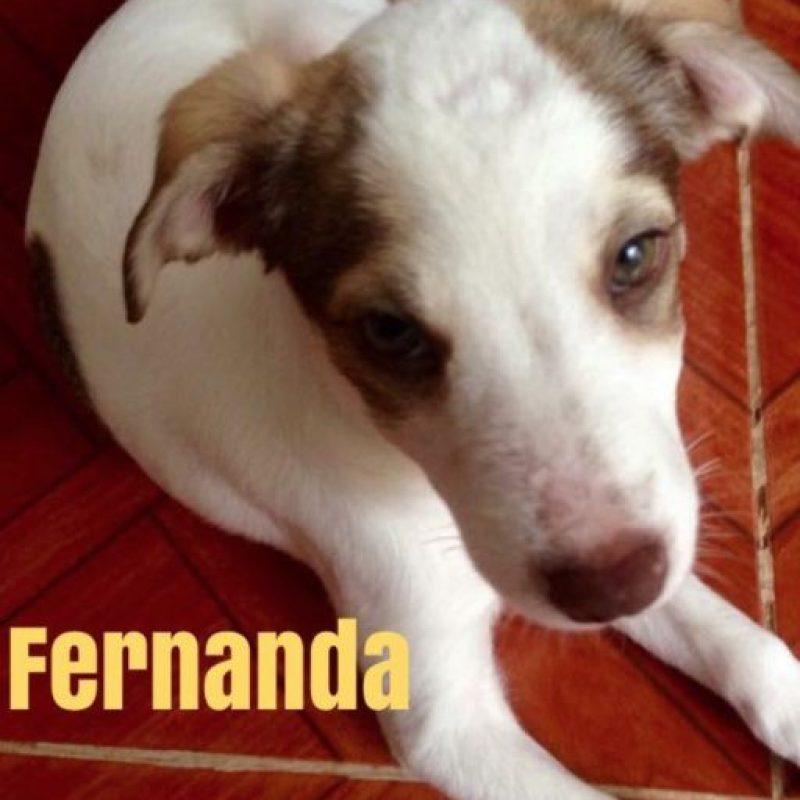 Foto:Vía Facebook/helptulumdogs