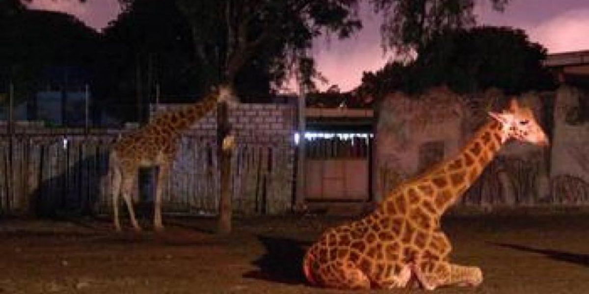 """Detalles de las """"Noches de Luna 2016"""" del Zoológico La Aurora"""