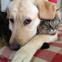 Los abrazos son lo mejor para demostrar su amor. Foto:Pinterest