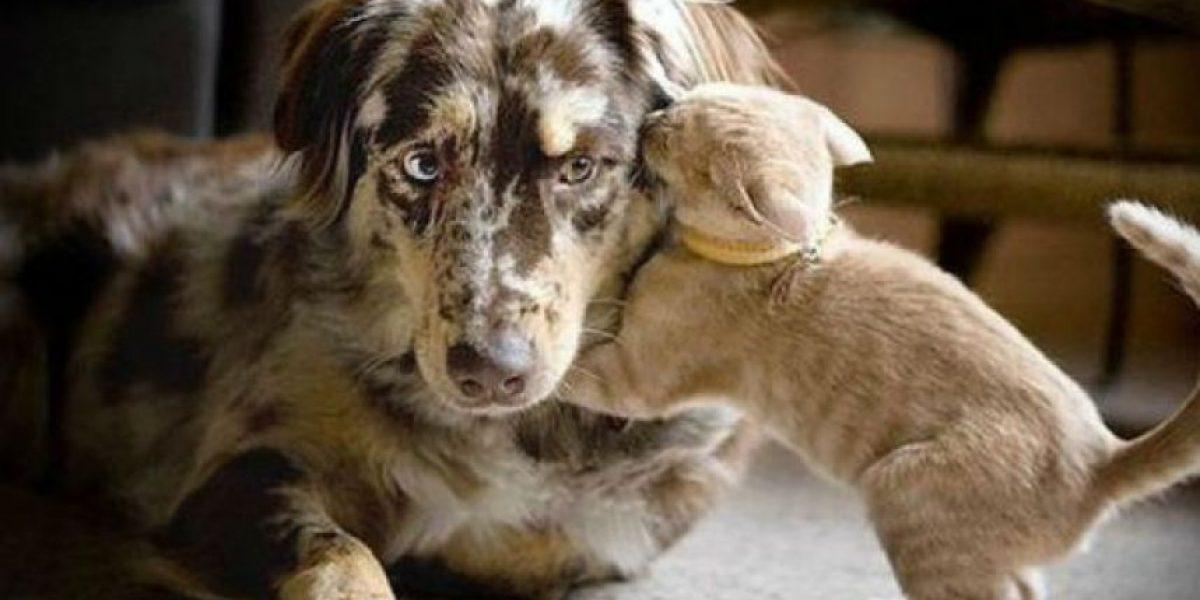 Animales: Rata no se separó de su amiga gata cuando dio a luz