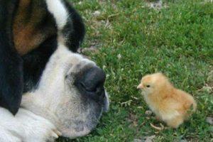 No importa que tan grandes o pequeños sean. Foto:Funpic.hu