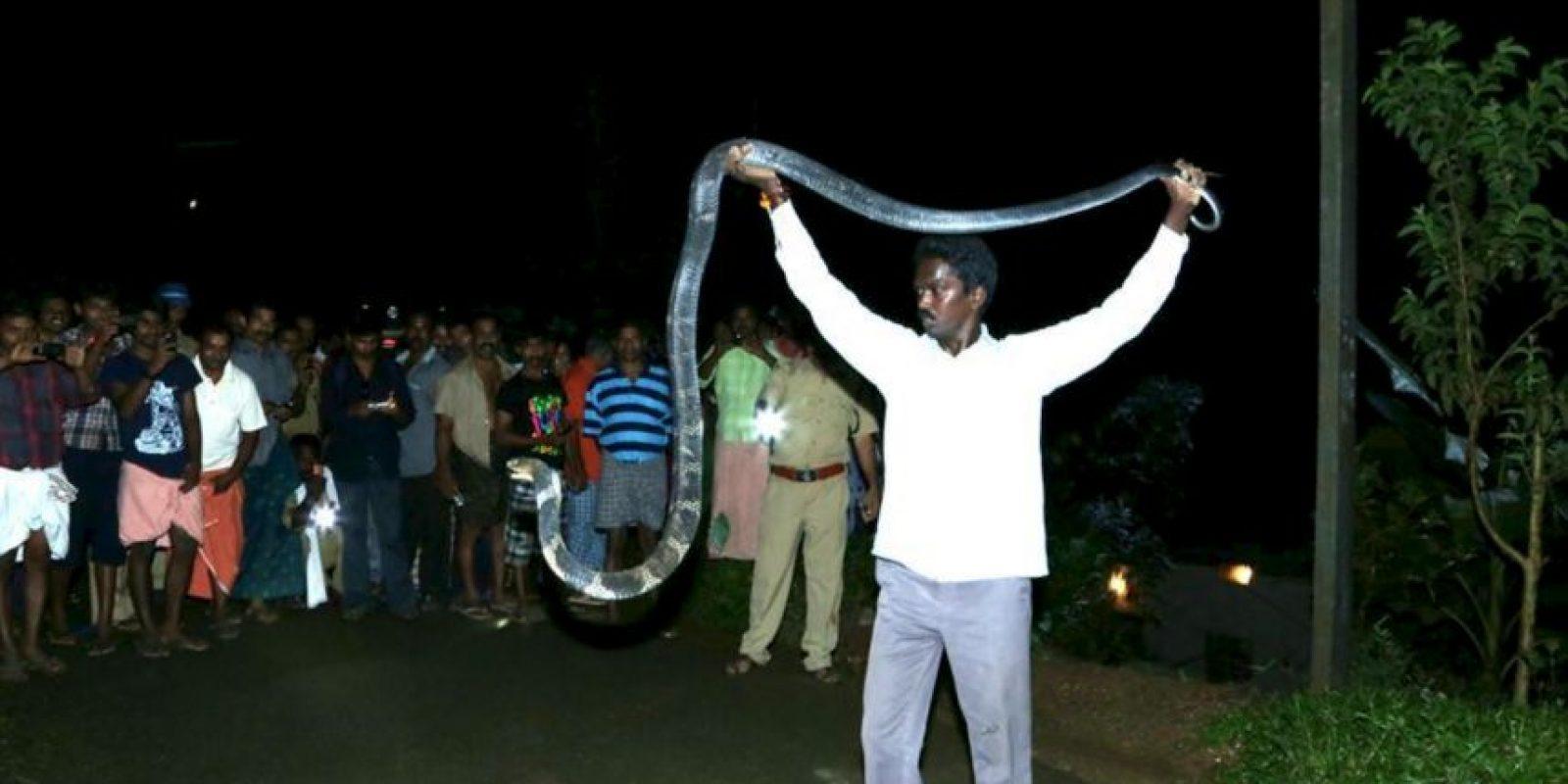 Ha rescatado a 17 King Cobras. Foto:vía Facebook