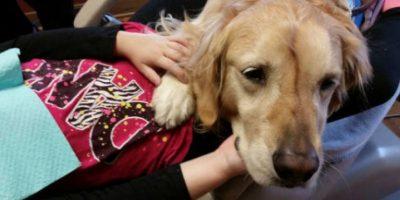 Personal de la clínica aprecia mucho el trabajo de Jojo. Foto:facebook.com/kidsddsnbk