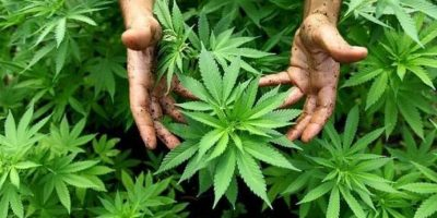 """Jimmy Morales dice que """"está muy verde"""" considerar propuesta de legalizar la marihuana"""