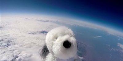 El perro Sam llegó a donde ningún animal lo hizo antes: la estratosfera