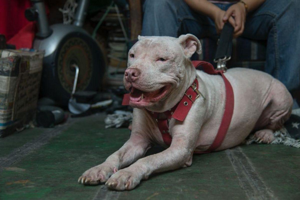 Cada rescate que Quan realiza, lo entrega a una familia que lo adopte Foto:Luis Carlos Nájera