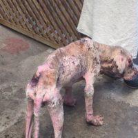 El es Nico, el perro que Corey Quan rescató en 2015 Foto:Cortesía Corey Quan