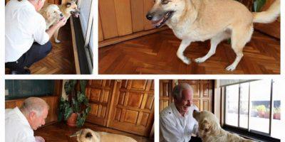 Alcalde Álvaro Arzú comparte foto de sus nuevas mascotas y guatemaltecos reaccionan