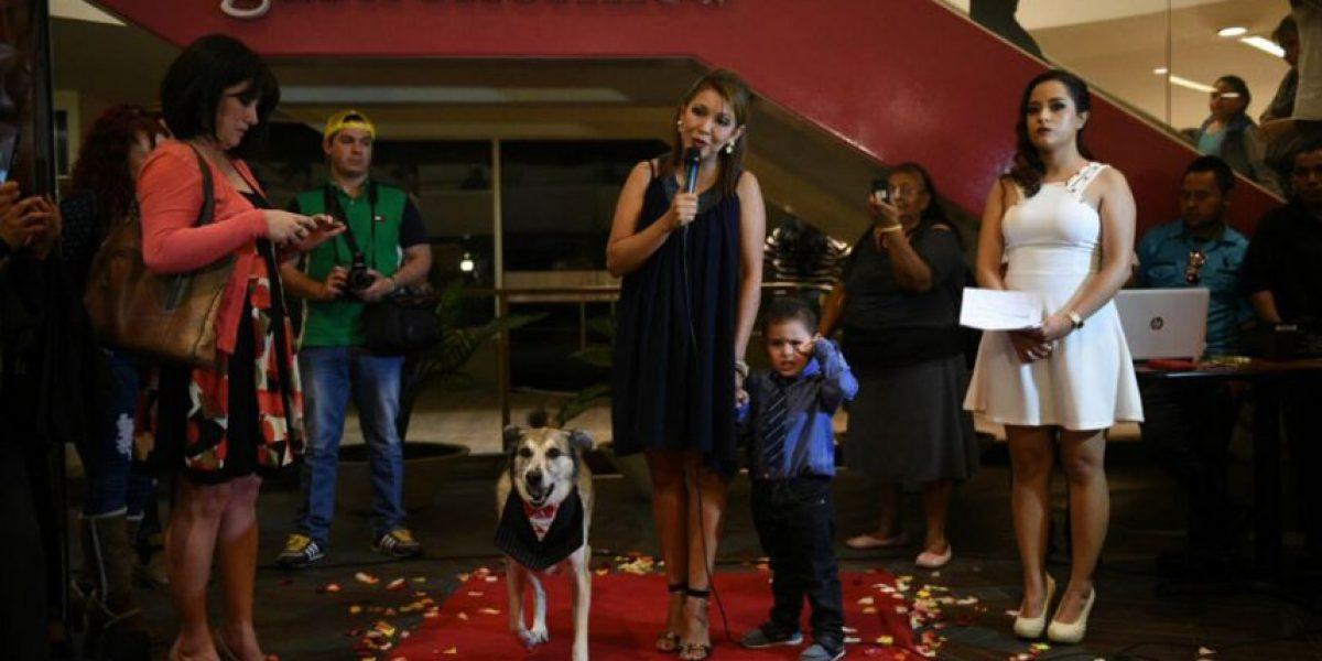 Se estrena oficialmente la primera película canina guatemalteca: