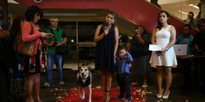 "Se estrena oficialmente la primera película canina guatemalteca: ""Fichulais: Un callejero con suerte"""